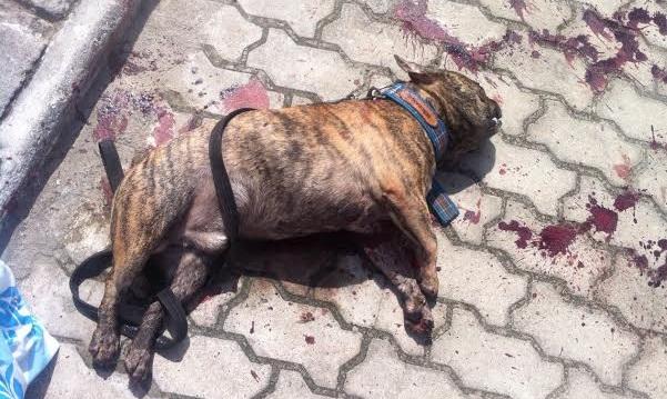 Cachorro que Wilson Santos matou